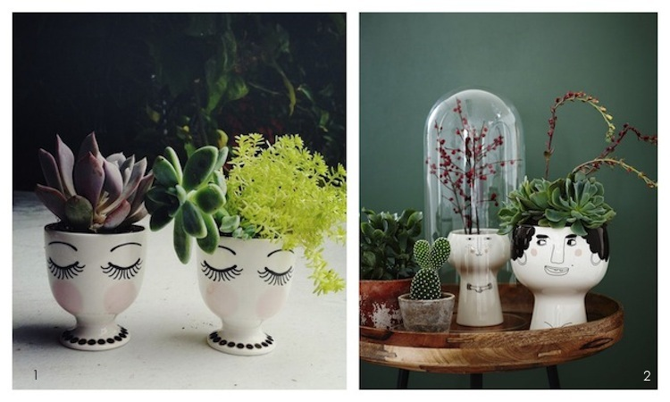Pics for cool indoor plants - Cool looking house plants ...