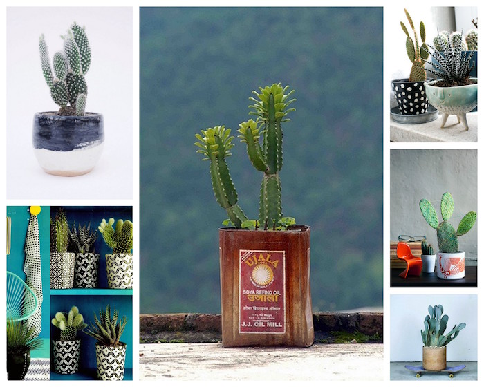 A Bolt of Blue - COOL as a cactus!