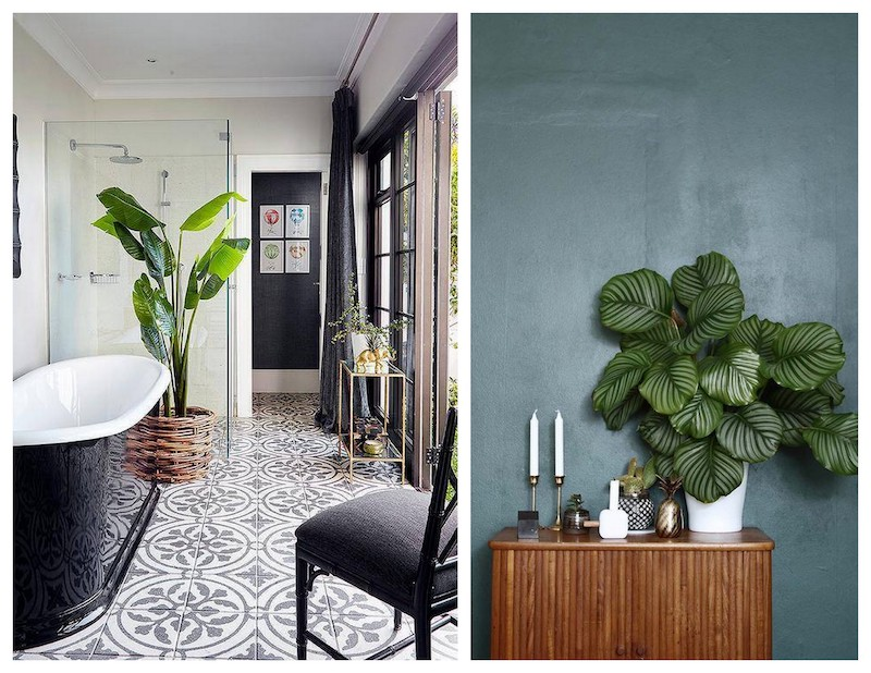 A Bolt of Blue - Decorating with Plants!